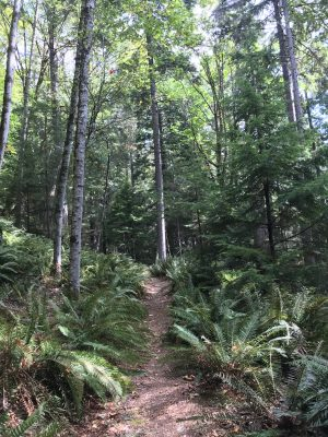 A single track dirt path leads up a hill between ferns and trees