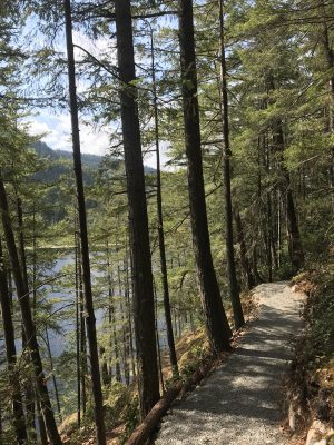 A gravel path winds between trees. To the left, down a steep hillside, a lake can be seen